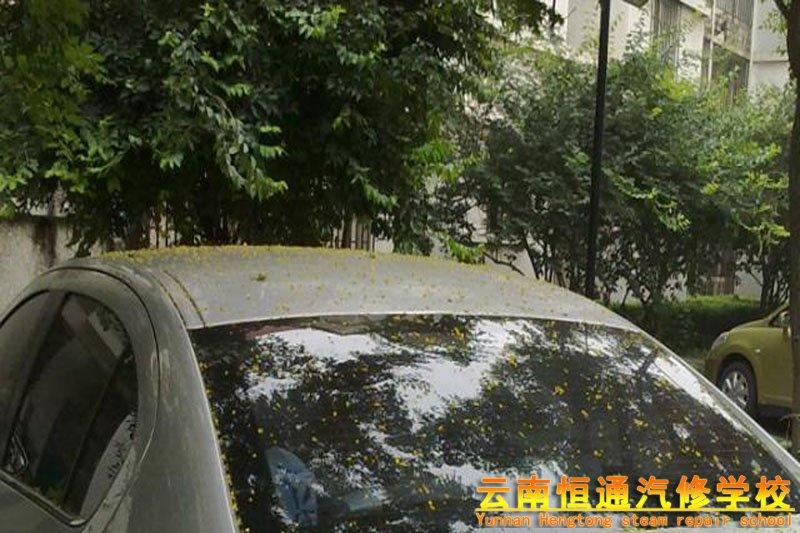 雨水并非是最强车漆杀手,这东西看似不起眼,你想知道是什么吗?